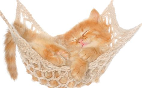 Kitten In A Hammock by Kitten Sleeping In Hammock 4k Ultra Hd Wallpaper