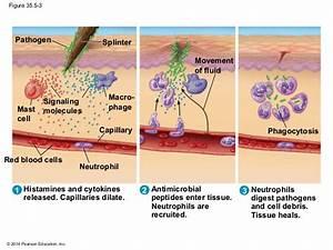 Biology In Focus