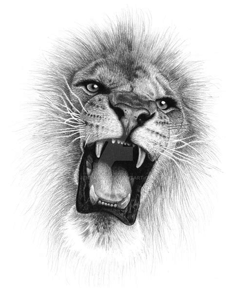 Best Lion Roaring Drawing Ideas And Images On Bing Find What You