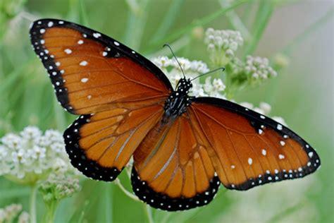 Beautiful Butterflies Of The American Deserts