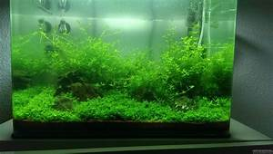 Co2 Rechner Aquarium : first scape flowgrow aquascape aquarium database ~ Orissabook.com Haus und Dekorationen
