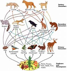 101 best images about Food Chains/Webs on Pinterest ...