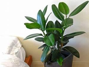 Arbuste D Intérieur : 10 plantes d 39 int rieur faciles r ussir ~ Premium-room.com Idées de Décoration