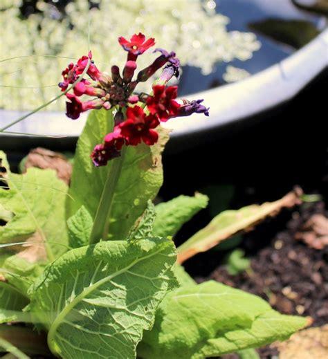 Pflanzen Fürs Kiesbeet by Ein Feuchtes Kiesbeet Garten Wissen