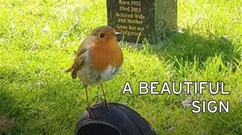 how robins proved loved ones are still with their