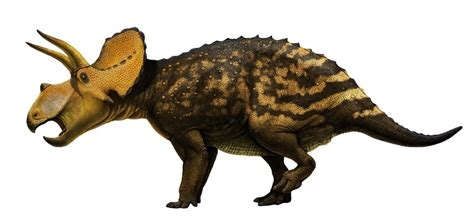 eotriceratops pictures facts  dinosaur