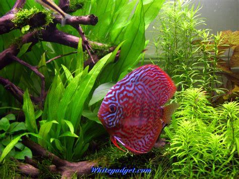 Animated Fish Wallpaper For Pc - aquarium live wallpaper for pc wallpapersafari
