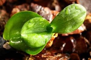 Orchidee Klebrige Tropfen : orchideen harzen woher kommen die tropfen ~ Lizthompson.info Haus und Dekorationen
