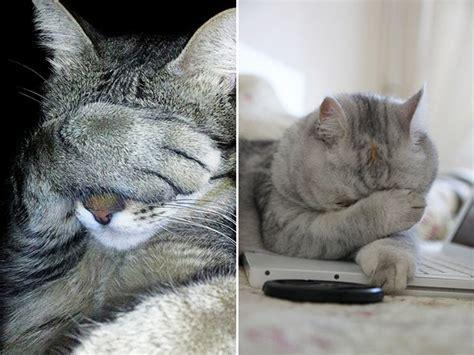 cats    ashamed