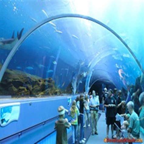 aquariums  america reefscom