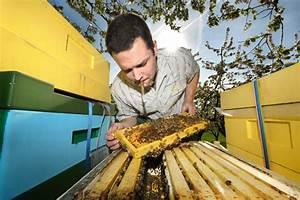 Warum Machen Bienen Honig : honigportal informiert ber bienen honig propolis gelee royale usw von der imkerei honig ~ Whattoseeinmadrid.com Haus und Dekorationen