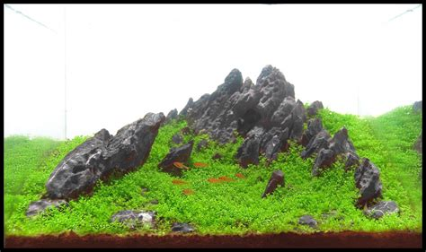 mountain aquascape planted tank shaman s mountain by antonio nikolic