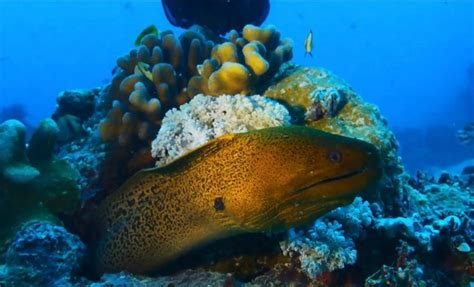 Great Barrier Reef: Already a third of the Coral is dead - ScienceNewsHub
