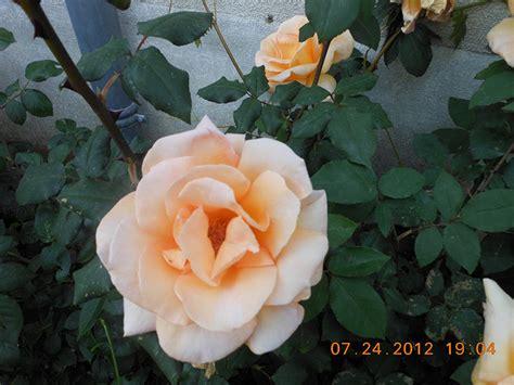 la roseraie de vrigny
