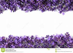 Whitish-lavender clipart 20 free Cliparts | Download ...