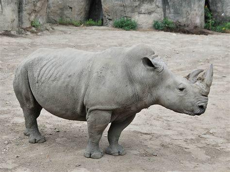 zoo indianapolis zoos animals usa visit