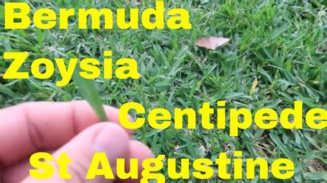 Bermuda, Zoysia, St Augustine And Centipede Warm Season