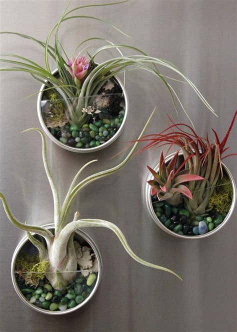 air plant fridge magnets hgtv