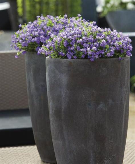 patio  balcony planter ideas