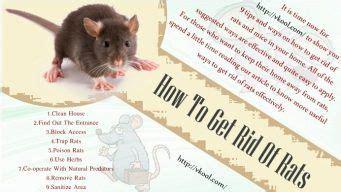 how to get rid of mice in house 9 tips and ways how to get rid of rats and mice in your home