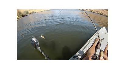 Fishing Bass River Smallmouth John Animated Fish