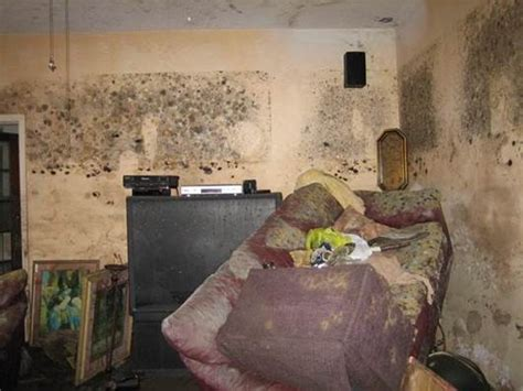 tips  cleaning mold   flood blogs cdc