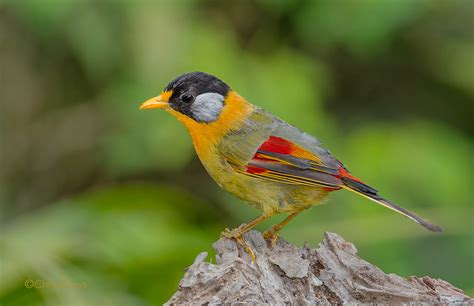 types of birds in alabama pictures to pin on pinterest