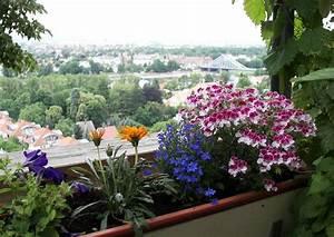 Blumen Für Den Balkon : balkonblumen pflege pelargonien lobelien mittagsblumen ~ Lizthompson.info Haus und Dekorationen