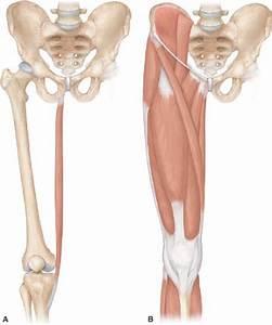 Gracilis Muscle Flaps