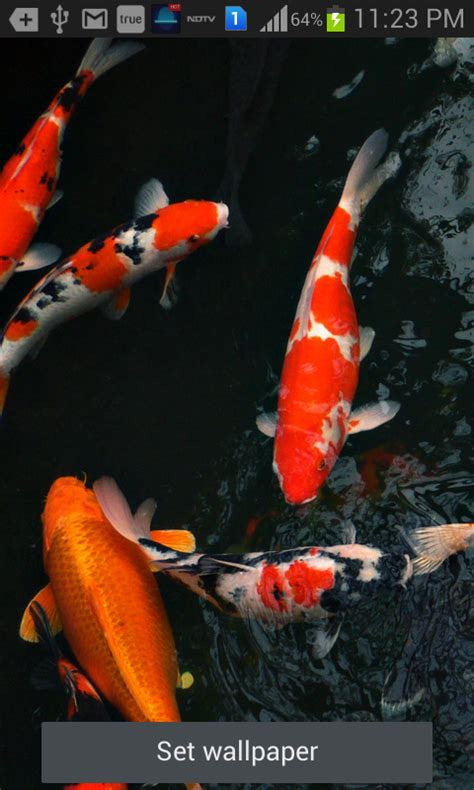 Animated Koi Fish Wallpaper - koi fish animated wallpaper impremedia net