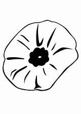 Poppy Coloring Remembrance Close Flower Printable Popular Coloringhome sketch template