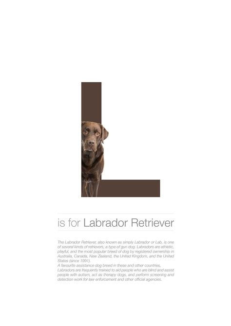 dog alphabet       letters