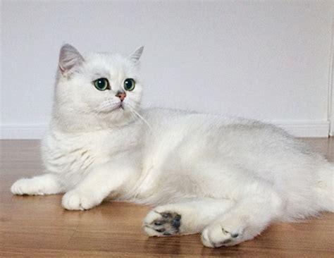 Kaķi - SUNU AUDZETAVA LEMISEL