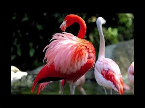 how do flamingos get their pink color 16 best images about in many shapes forms on