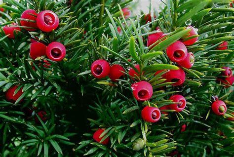 Mediterrane Kübelpflanzen Winterhart by Mediterrane Geh 246 Lze Geben Dem Mediterranem Garten Das