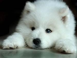 Bébé Loup Blanc : bebe loup blanc mes truc ~ Farleysfitness.com Idées de Décoration