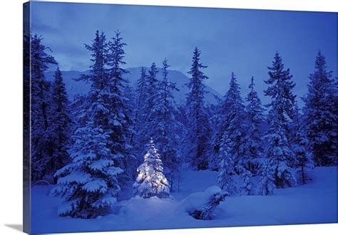 christmas tree in the forest photo canvas print great big canvas