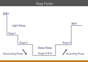 REM Sleep Cycle Stages