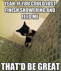 Sneaky cat. | Makes Me Laugh | Pinterest