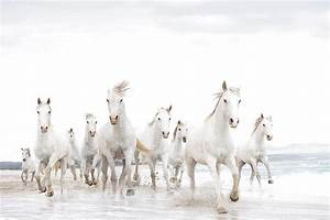 """High Quality Stock Photos of """"wild horse"""""""