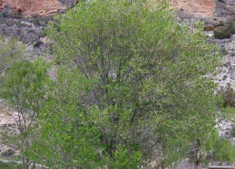 Plantes Del Nostre Entorn