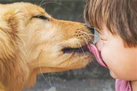 dog licking    means dogtime
