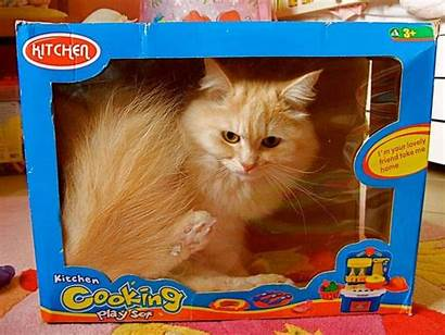 Cats Boxes Funniest