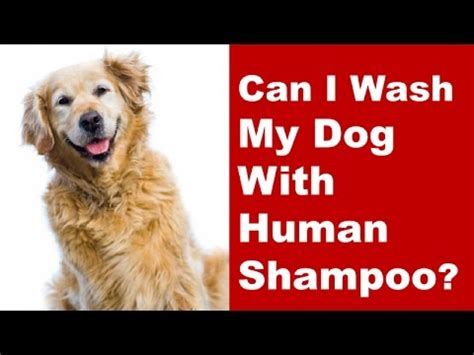 Can I Wash My Dog Using Human Shampoo? Youtube