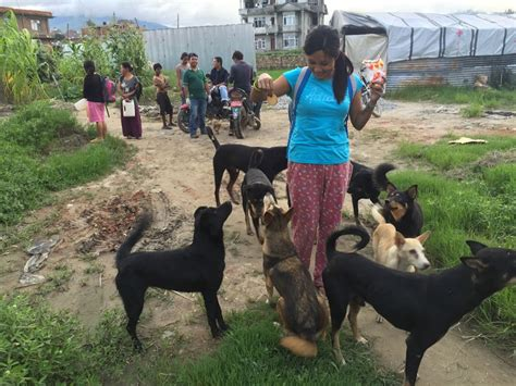 Maddies Story Part I From The Streets Of Kathmandu To Finding Her Home  Miles Away  Ee  Dog Ee