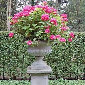 Hortensie Umpflanzen Im Topf : hortensien im topf pflanzung und pflegetipps mein sch ner garten ~ Orissabook.com Haus und Dekorationen