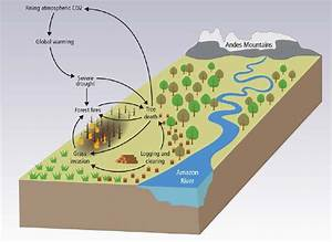 Ecosystem Feedbacks From Carbon And Water Cycle Changes