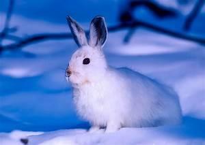 Fliegen Abwehren Draußen : kaninchen im winter drau en halten tierglueck haustierratgeber ~ Whattoseeinmadrid.com Haus und Dekorationen
