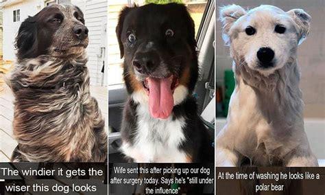 snapchat  show dogs  social media  storm