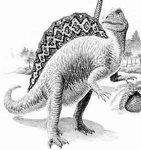 Spinosaurus | Natural History Museum